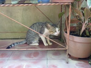 Kucing anti melet