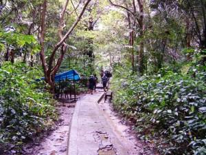 Persis di hutan