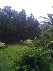 Foto pemandangan depan rumah