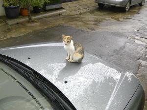 Kucing yg Lucu
