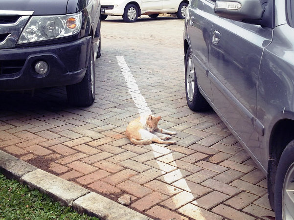 Ada kucing sedang parkir