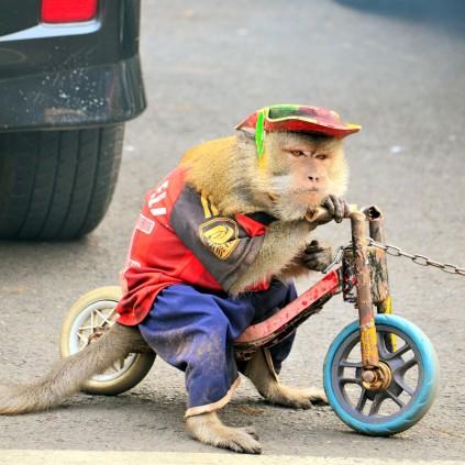 Sepedaan yuk, Bang?