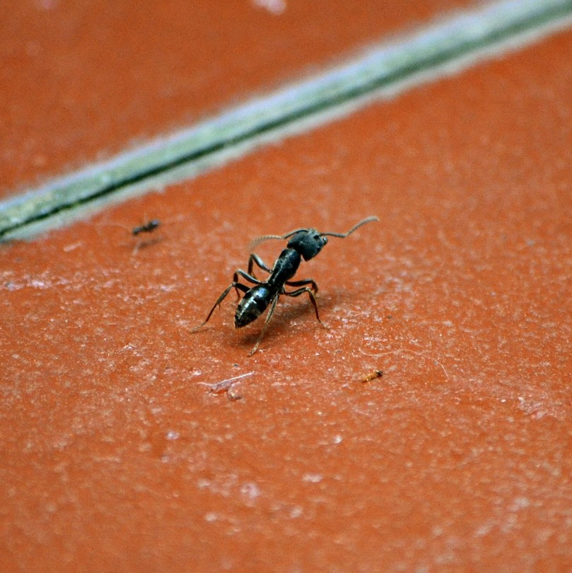 Tetapi semut kecil marah dan menggigit semut besar sampai tunggang langgang