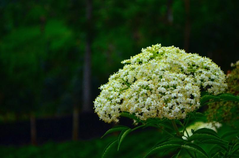 Bunga rombongan