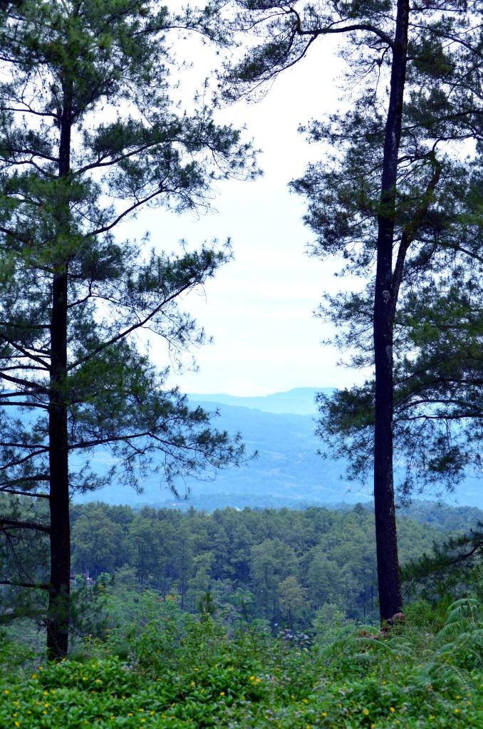 Salah satu sudut pandang di Hutan Pinus Malino