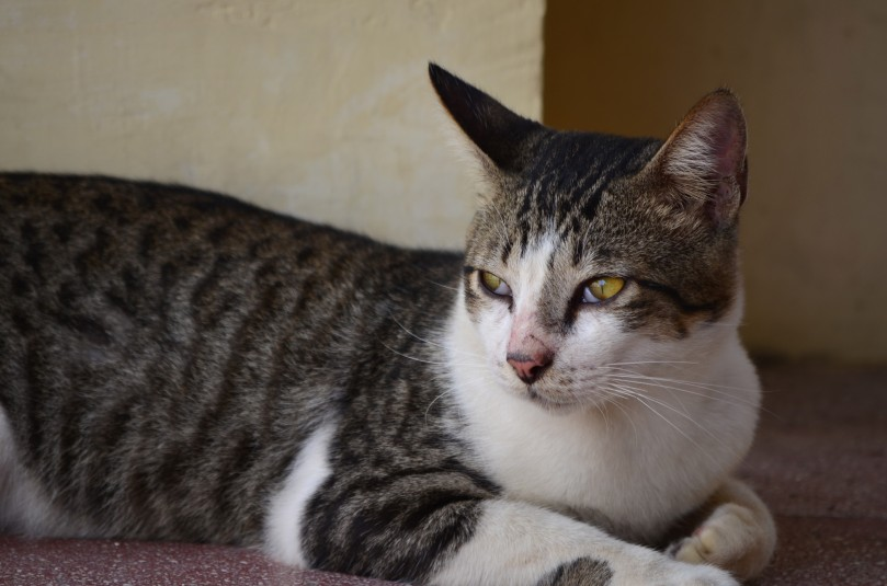 Kucing yang sedang santai berteduh