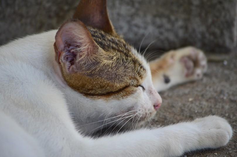 Angin sepoi-sepoi membuat kucing mengantuk