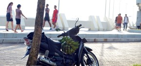 Persediaan pisang hijau