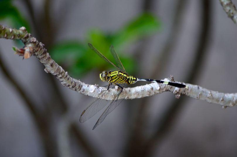 dragonfly01