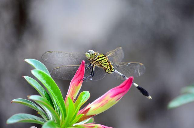 dragonfly02